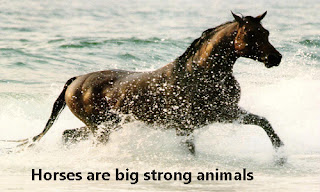 Friesian Horses are large strong animals