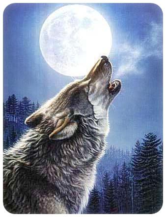 El hechizo de los libros Esta noche no hay luna llena de Care Santos