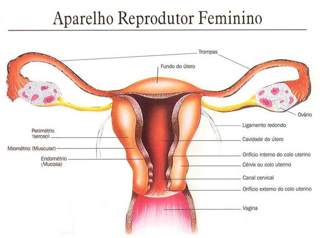 Anatomia dos Sistemas Reprodutores Masculinos e Femininos