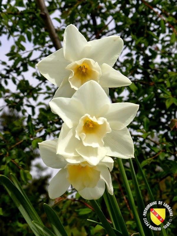 VILLERS-LES-NANCY (54) : Le jardin botanique du Montet-Narcisses