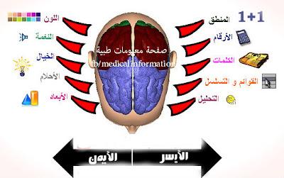 هل تستخدم نصف دماغك الايسر أم الايمن؟