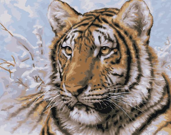Tiger Climbing Down
