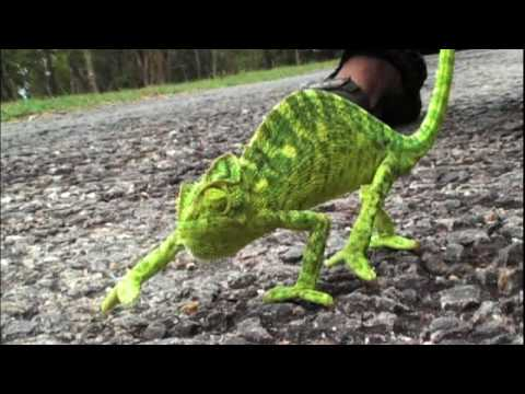 Funny Chameleon Pictures Online News Icon