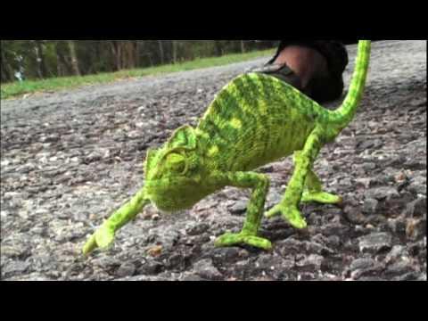 Funny chameleon pictures ONLINE