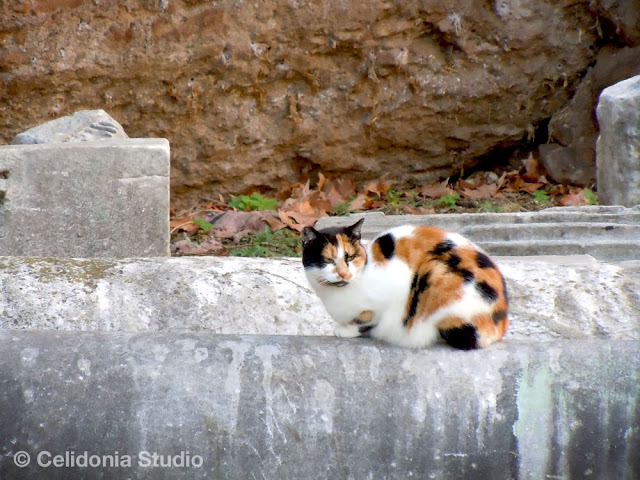cat near Porta Magica
