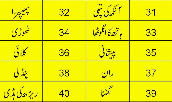 Urdu 2 English Human Body Vocabulary Part 4