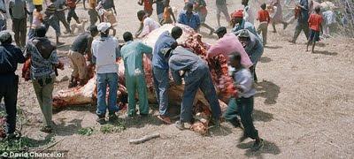 ciudadanos comiendo elefante