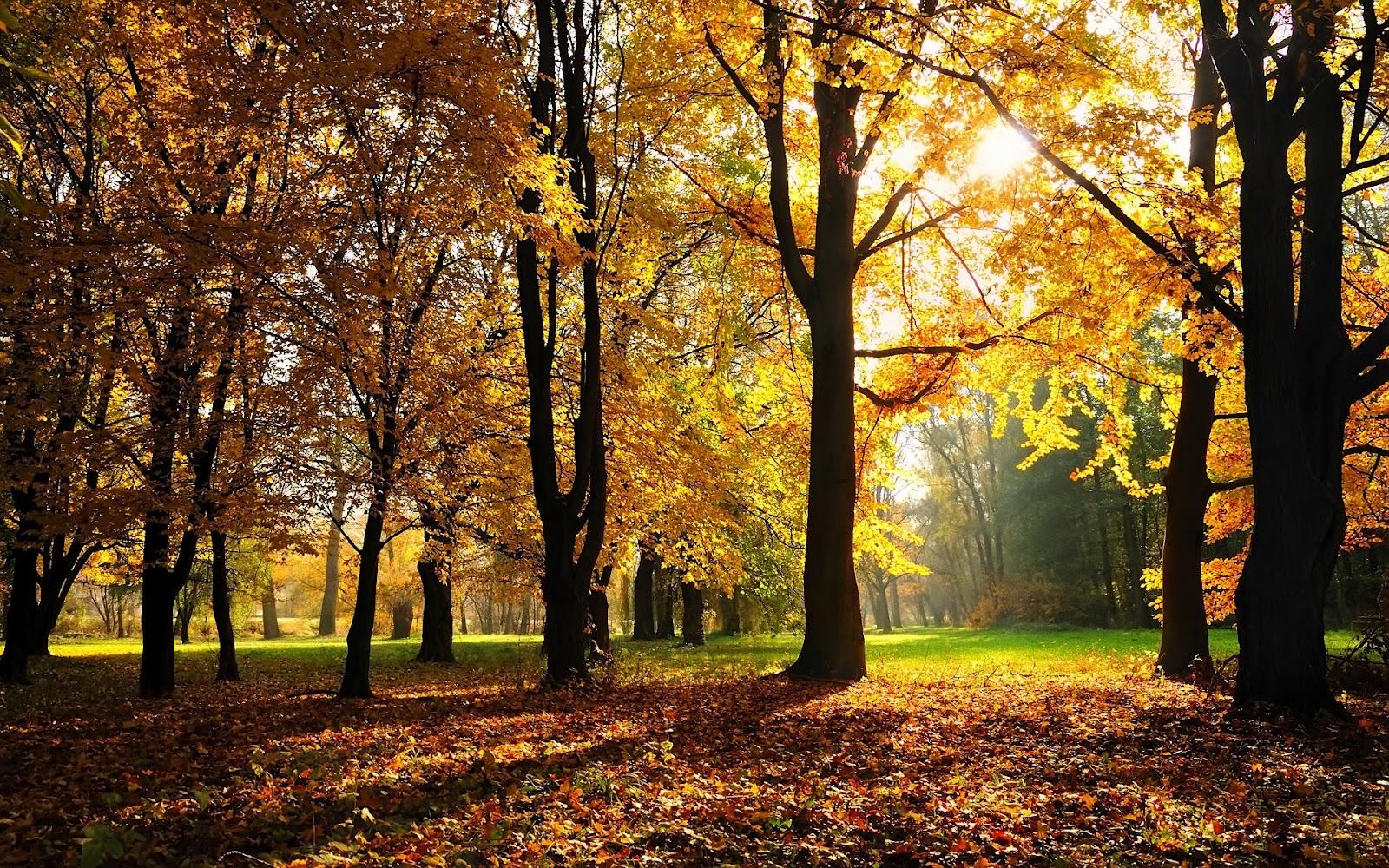 http://4.bp.blogspot.com/-vL-szTX8l-0/UClrELz_iQI/AAAAAAAAExc/Cl1oQYYJgE8/s1600/hd-herfst-wallpaper-met-een-park-tijdens-de-herfst-achtergrond-foto.jpg