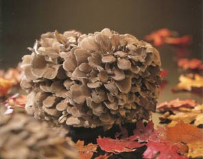 Polysaccharide in maitake mushroom is long-chain of glucose