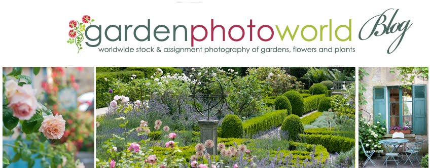 Paris Gardens and David Austin Roses from Garden Photo World