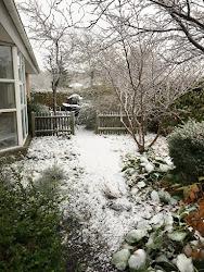 Den første sne. 6.11.2016
