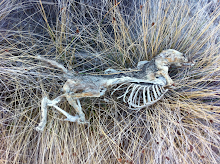 Skeleton found on Hondo Creek bed