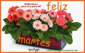 feliz martes con flores de colroes