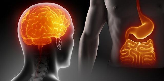 Невидимая ось мозг-кишечник: твой мозг и еда.