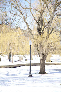 boston in the snow - a.e. tohline photography, jmae create