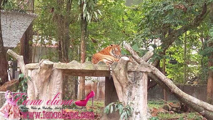 Kelab Blogger Ben Ashaari  Blogger's Day di Zoo Negara
