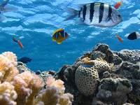 Tingkat Bioma - Samudra