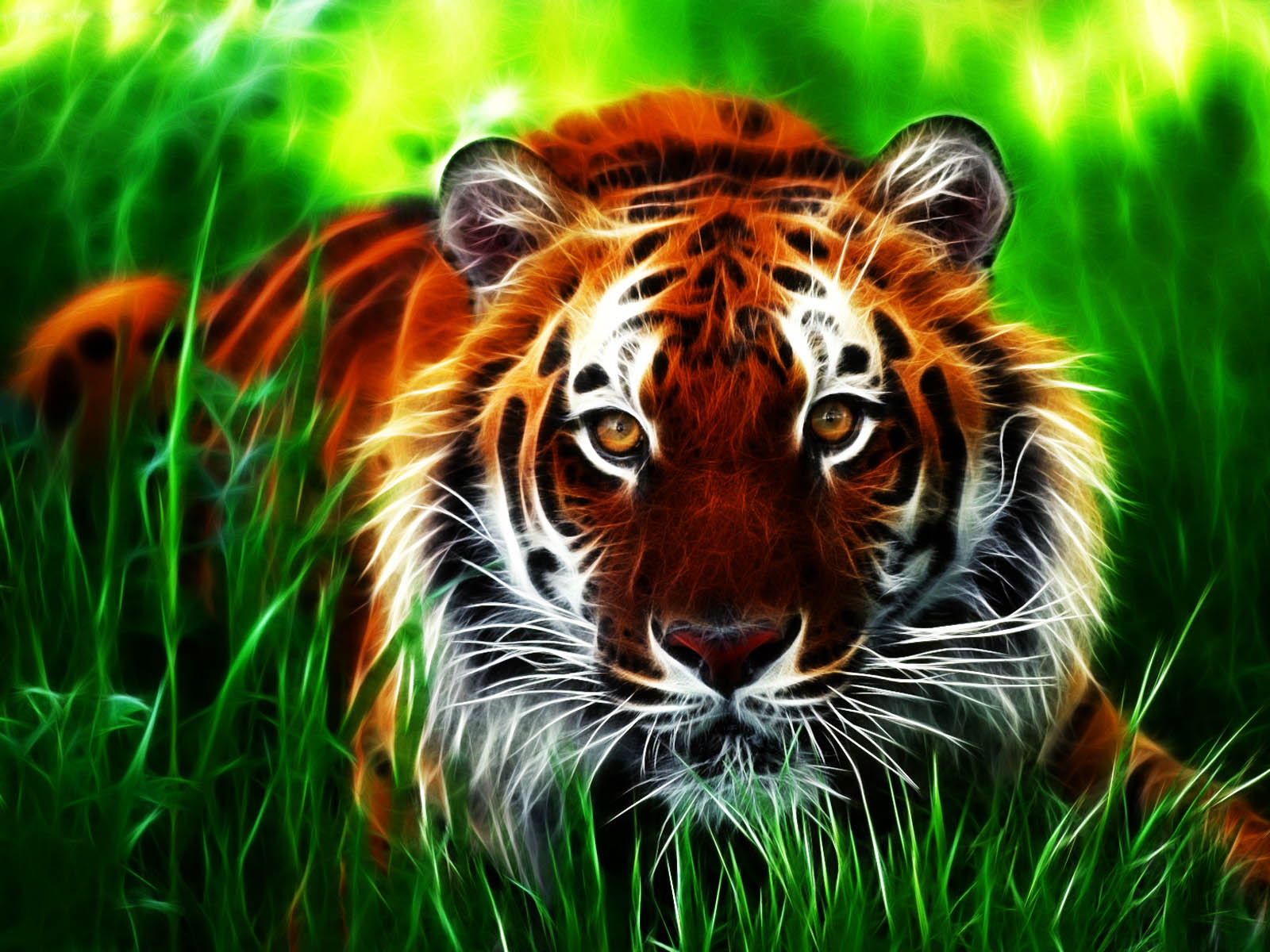 wallpapers tiger 3d wallpapers
