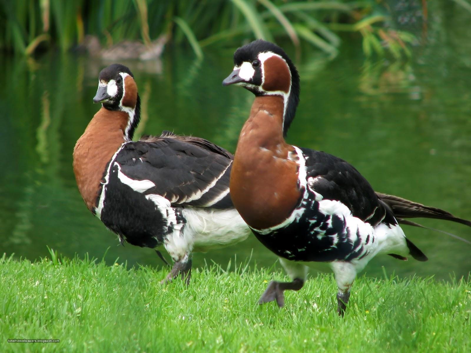Фото редких животных молдовы 5