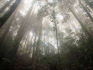 Penemuan Hutan Misterius.alamindah121.blogspot.com