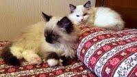 Wollie e Margot
