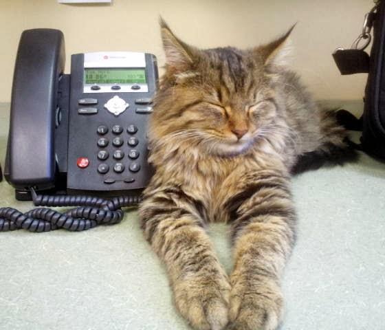 foto kucing kantor 02