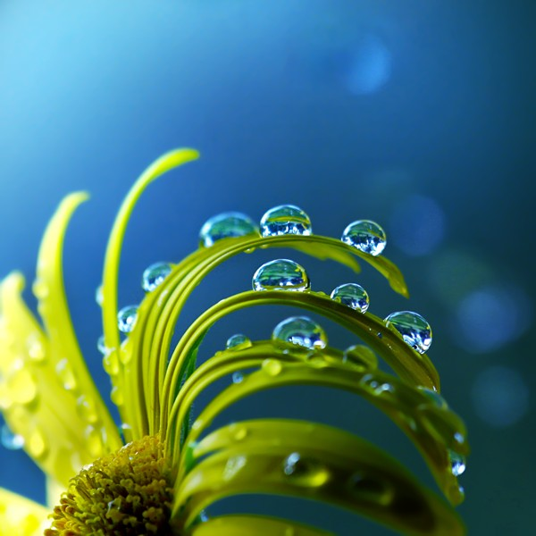 Macro Photography by Joakim Kraemer
