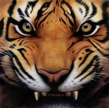 100 Angry Tiger Wallpapers Wallpaper Cave Angry Tiger Painting 4k