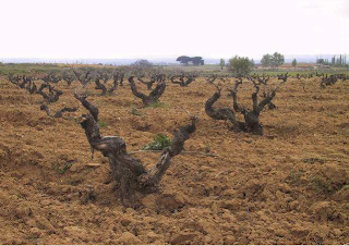 Ribera del Duero - King of Tempranillo.