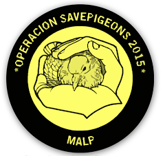 Web Malp_global