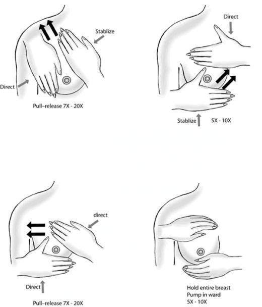 Cara Memperbesar Payudara Secara Alami Dengan Tangan Brad Erva