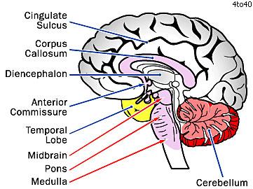 Brain Information1