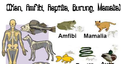 Hewan Vertebrata Ikan Amfibi Reptilia Burung Mamalia