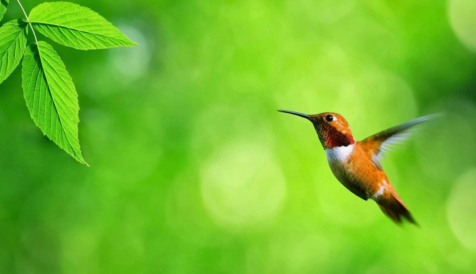 the real face of pakistan: beautiful birds wallpaper | hd birds