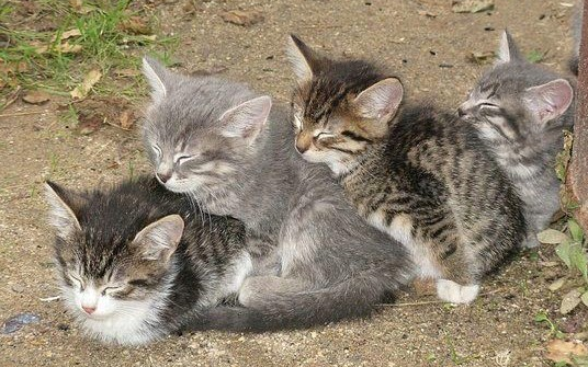 Funny picture of four cats