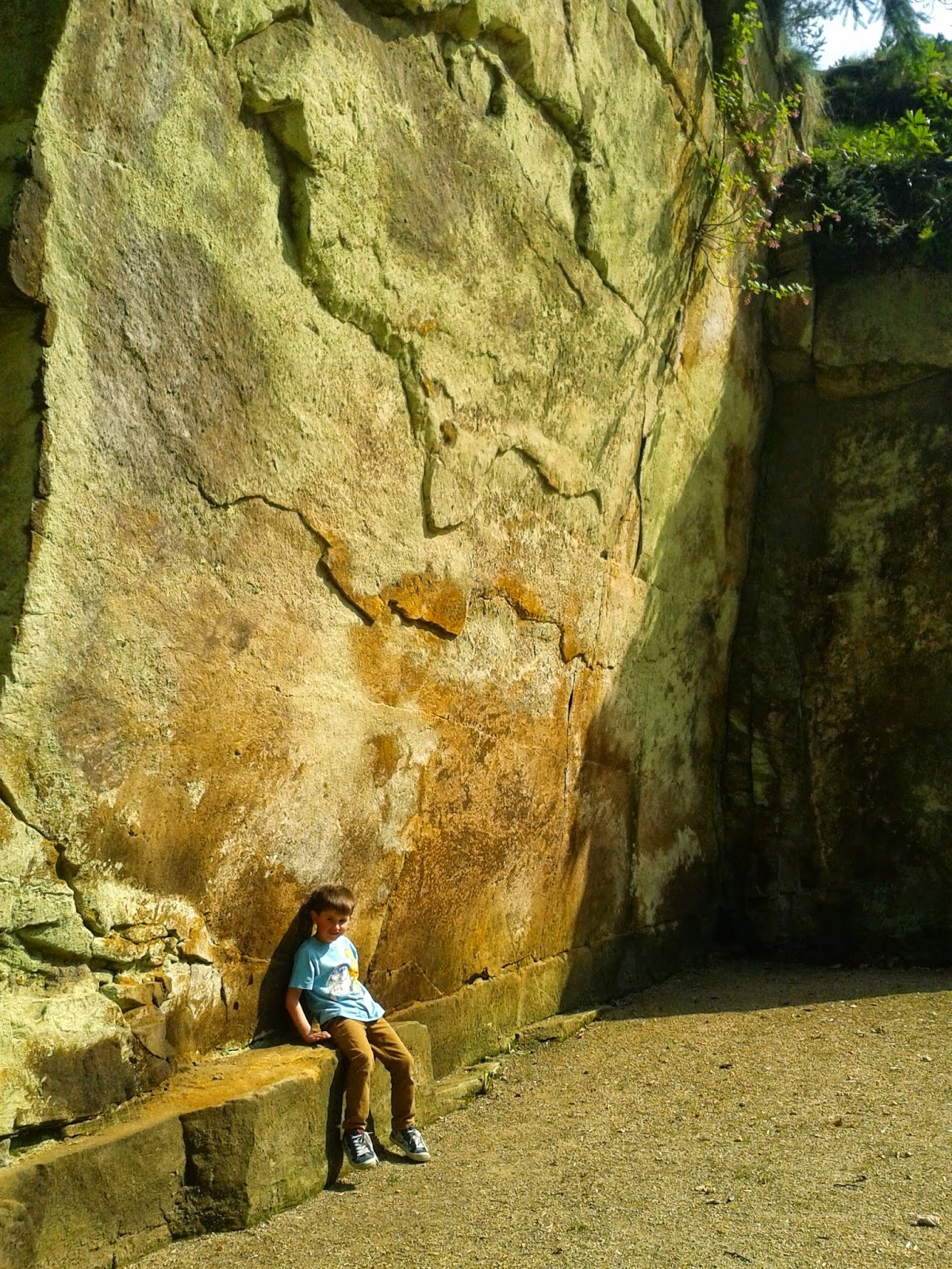 Belsay Hall, Castle and Gardens, Northumberland. Lucas relaxing in the Quarry Garden.