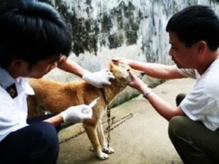 Cần tiêm ngừa dại cho chó mèo được nuôi, không nên thả rông chúng