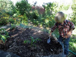 raised garden bed, planting potatoes