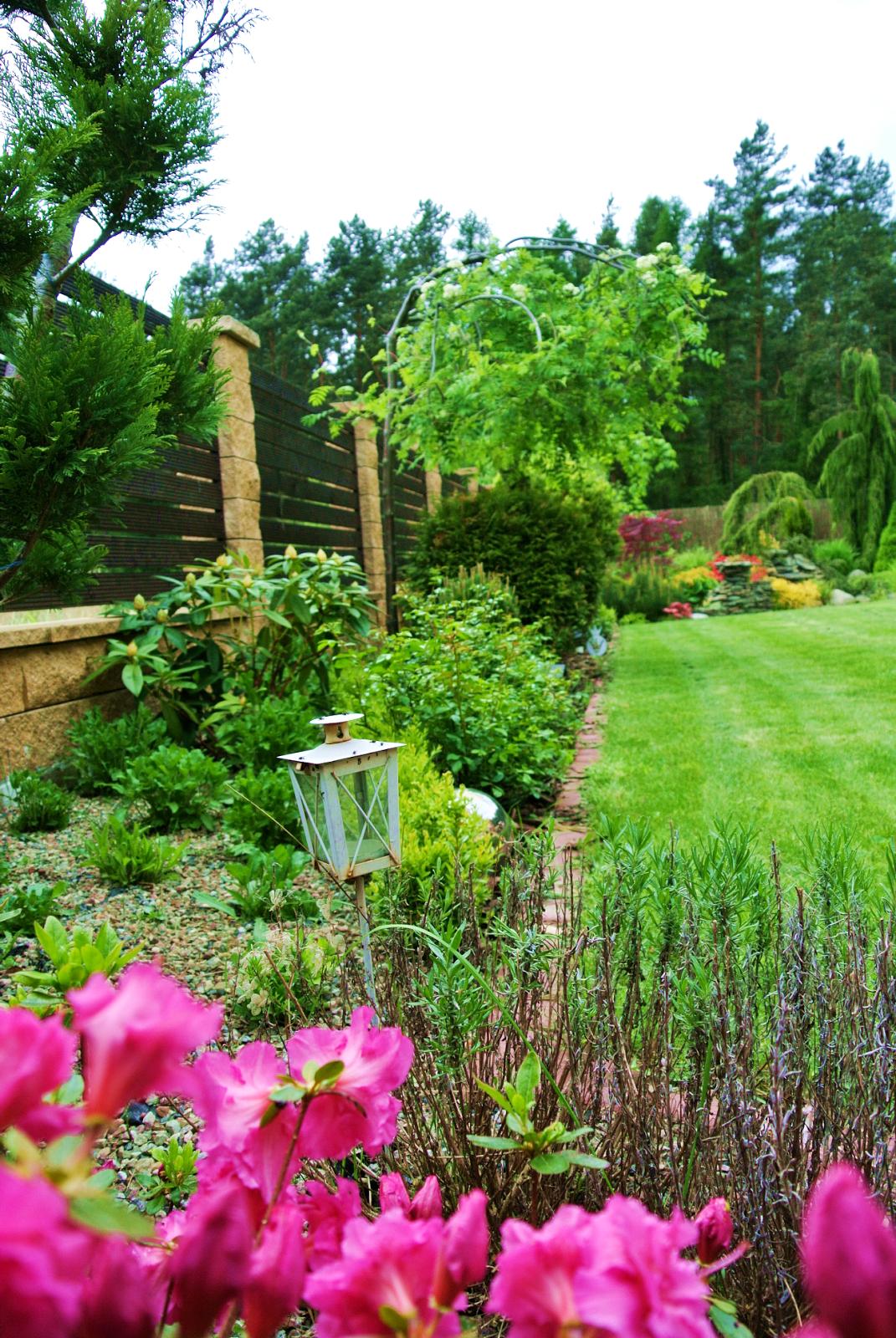 różanecznik różowy,hodowla roślin,rododendron,tarwnik,latarenki ogrodowe,jarzębina,wiąz,lawenda,dom w lesie,piękny dom,wnętrza,zewnętrza,blogerka