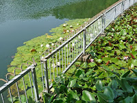 池には、スイレンやコウホネなどの花が咲ている。