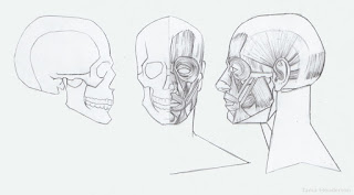 Robert m george facial geometry