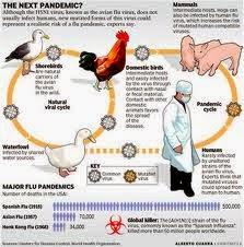 Bahaya Penyakit Flu Babi