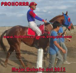 EL CABALLO DEL AÑO 2013