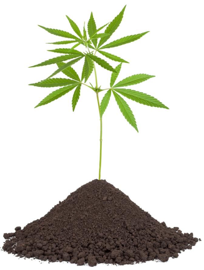 Cultivo loco esti rcol abono en nuestro sustrato - Abono organico para plantas ...