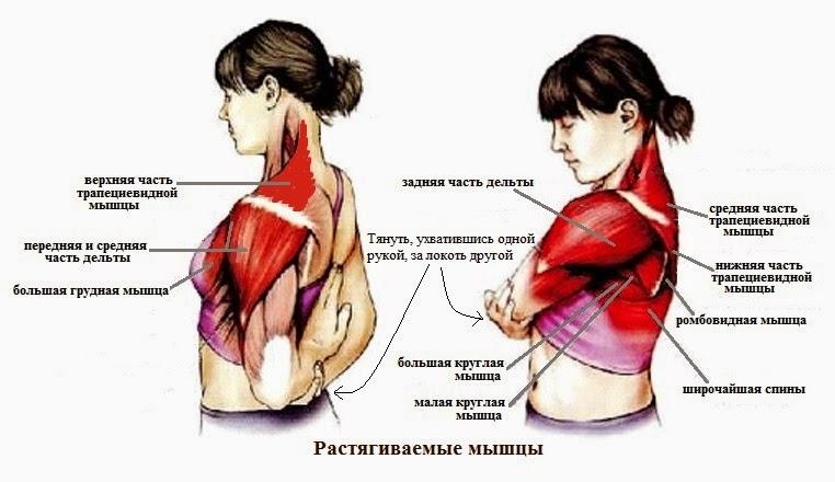 Растяжение мышцы позвоночника 34