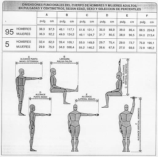De todo un poco antropometr a para el dise o for Tabla de medidas antropometricas
