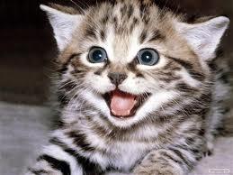 Gambar anak kucing lagi marah