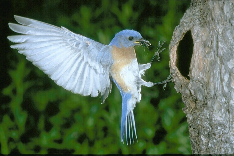 Bangladesh Is A Beautiful CountryBirds Have Increased Its Beauty MoreWe Sleep At Night And Rise Early In The Morning Hearing Sweet Songs Of Different