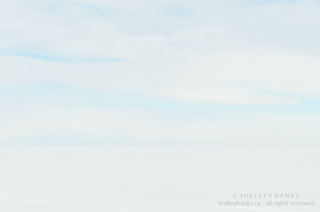 Snow blind: White field, white sky in Saskatchewan winter prairie scene - photo by Shelley Banks