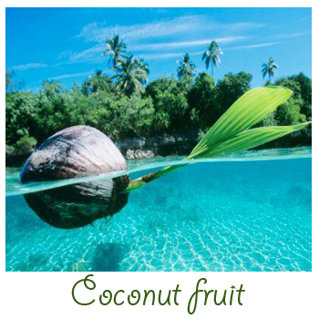 how to use coconut water for plants